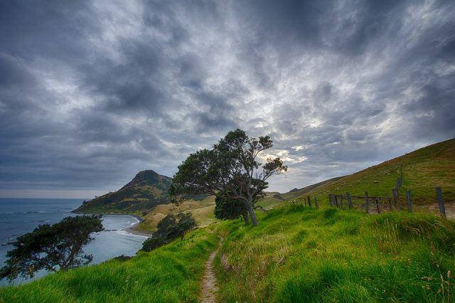 new zealand walks